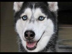 Mishka says 12 words - Dog Talking - YouTube
