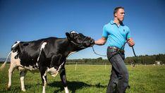 Vor zwei Monaten ist Matthias Sempach vom aktiven Schwingsport zurückgetreten. Nun wagt der Emmentaler einen Neustart: Er wird Bauer und übernimmt einen eigenen Betrieb. Entlebucher, Star Wars, Sport, Animals, Deporte, Animaux, Sports, Starwars, Animal