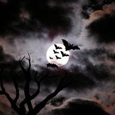 images of bats flying | Flying Bats | iPadWallpaperPortal.com