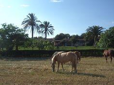 Visit Residenza Santa Igia  Sardinia!  www.santaigia.it