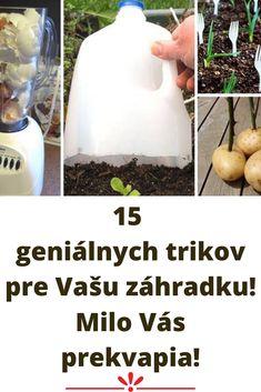 15 geniálnych trikov pre Vašu záhradku! Milo Vás prekvapia! Vaši susedia budú žiarliť Soap, Personal Care, Bottle, Self Care, Personal Hygiene, Flask, Bar Soap, Soaps, Jars