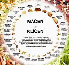 Klíčenie fazule mungo a šošovice Clean Recipes, Raw Food Recipes, Healthy Recipes, Mango Recipes, Healing Herbs, Dessert For Dinner, Base Foods, Nutritious Meals, Healthy Baking