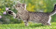ΦΥΣΙΚΑ ΓΙΑΤΡΙΚΑ: Η δύναμη της φύσης στην υπηρεσία των κατοικιδίων μας!: http://biologikaorganikaproionta.com/health/240940/