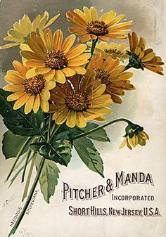 Beautiful vintage seed packet art  Short Hills, NJ