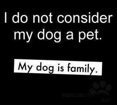 Yeah I can't stand people who think their animals are just pets. No my animals are my family I Love Dogs, Puppy Love, Jiff Pom, Visual Statements, Dog Quotes, Animal Quotes, Family Quotes, Dog Sayings, Random Sayings