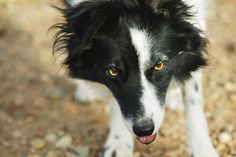Games to Play With Herding Dogs