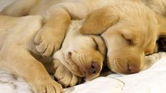 Cute Sleeping Animals - wallpaper.