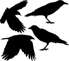 Flock of Four Crows Vinyl Wall Decals