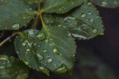 Rain drops.