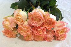 Allyson Garden Roses