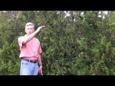 ▶ How To Prune a Hedge - YouTube