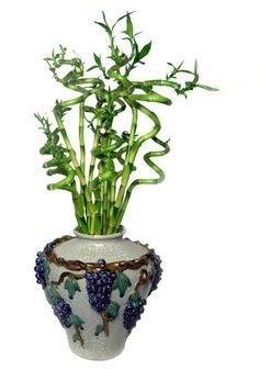 Pinterest the world s catalog of ideas - Lucky bambou acheter ...