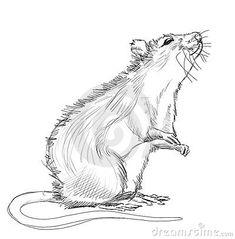 Het dierenwinkeltje - Rat
