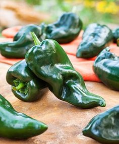 This Bonnie Poblano is a very popular Chile pepper. Grow your own poblanos to create Chile's rellenos. This is the same fruit that is known as an Ancho when allowed to ripen red and dry. Grow Organic, Organic Plants, List Of Peppers, Chili Relleno, Capsicum Annuum, Spicy Dishes, Pepper Plants, Bush Beans, Pepper Seeds