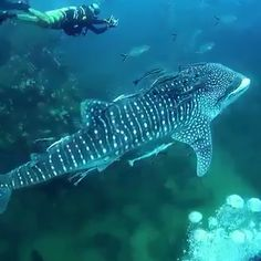 an underwater adventure with marine life Underwater Animals, Underwater Life, Nature Animals, Animals And Pets, Beautiful Creatures, Animals Beautiful, Deep Sea Creatures, Beautiful Fish, Pisces