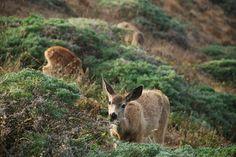 Grazing deer #nature #deer