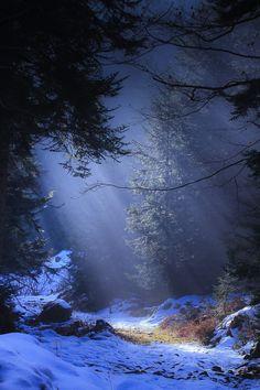 Lumière sous les sous-bois du parc régional du pilat - France
