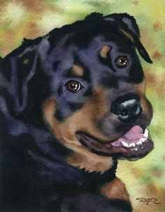 ROTTWEILER Art Print Watercolor Signed by Artist DJ Rogers
