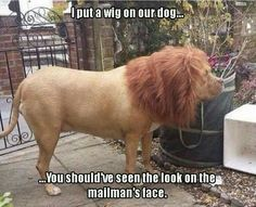 That's pretty funny! I'm surprised it stayed on the dog and he didn't shake it off.