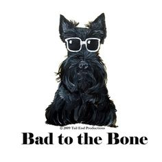 Scottish Terrier Bad to the Bone