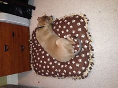 No-Sew Dog Bed Cover!