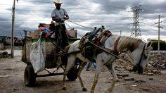Que se prohíba el uso de caballos o burros para jalar carros de basura.
