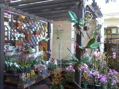 Fênix Plantas e Jardins: ORQUÍDEAS: Como montar um Orquidário em qualquer espaço.
