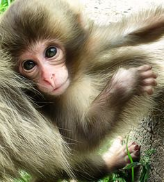Young Monkey by Teresa Lunt - Photo 123787465 - 500px