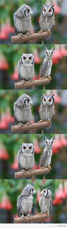 If we were owls....this would be me and my best friend....bahaha