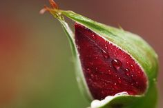 drops on flower by kheptan on 500px
