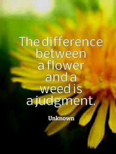 The difference between a flower and a weed is a judgement
