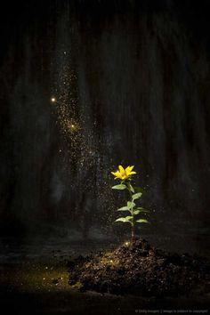 ....moonlight