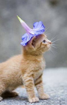 Adorable flower hat on cute cat ... to see more click on picture