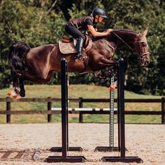 That amazing feeling Equestrian Stockholm now in stock at Equestrian Performance! Cute Horses, Pretty Horses, Beautiful Horses, Show Jumping Horses, Show Horses, Equestrian Outfits, Equestrian Style, Equestrian Fashion, Horse Photos