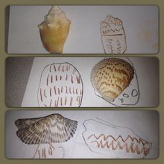 Observational Drawings- noticing patterns in shells #darlamyersclass