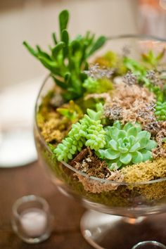 Succulent Centerpieces ;)  Flowers by grammabs.com, Photo by scobeyphotography...    let each child make a succulant terrarium to take home with a tiny plastic dino in it