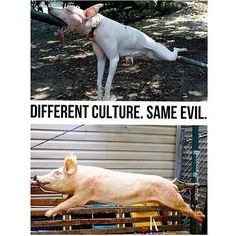 If you are not vegan then at least consider it. There really no difference between each animal. Meat is meat, and a life is a life. All animals make great pets if you don't eat them.