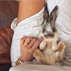 bunny cuddles.