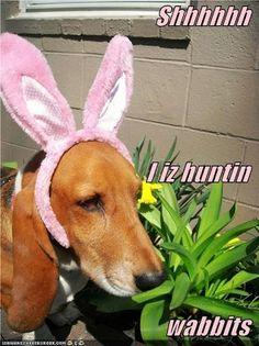 Shhhhh, rabbits hear everything!