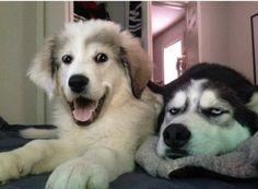 Quando o seu amigo espera você rir de sua piada estúpida.