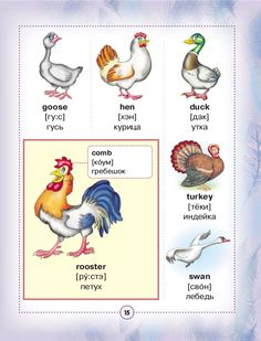 English russian visual dictionary English Grammar Worksheets, English Verbs, English Book, English Study, English Class, English Vocabulary, Learn English, Russian Lessons, English Lessons