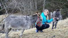 Goats, Cow, Animals, Animales, Animaux, Cattle, Animal, Animais, Goat