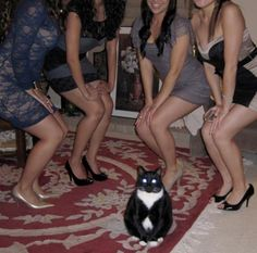 This cat rules