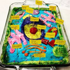 My daughter's animal cell cake. Biology is so delicious. by Ree Drummond / The Pioneer Woman, via Flickr
