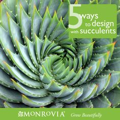 5 Ways to Design with Succulents. Succulents have become stars of the garden world over the past few years, and it's easy to see why. Water-wise, fuss-free, sculptural, colorful and just plain cool, they're one of this decade's must-have plants. While they look amazing simply planted in a pot, it's easier than you may think to incorporate these plants into your garden's design. And not just in the warmer zones; if you live in a colder zone—zones 4-7–many succulents are winter-hardy!