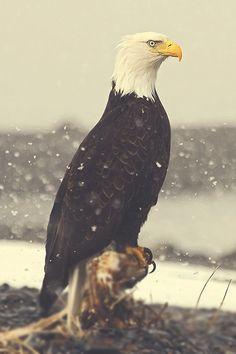 Des photographies en couleur et en noir et blanc pour le plaisir de découvrir la nature et le...