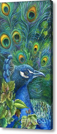 Enticing Peacock Acrylic Print By Kathy Brecheisen