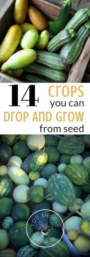 Grow your own food from seed simply by dropping it in your garden and watering. Find out which seeds are the easiest to drop and grow #vegetablesgardening #GardeningTips