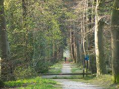 Een mooie afwisselende wandeling in de Kop van Drenthe. De wandelaar loopt vanuit Roderesch naar het stroomdal van het Lieverse Diep. Via het Mensinge bos en het Sterrenbos vervolgt de wandelaar langs het maaipad van het gekanaliseerd deel van het Lieverse Diep en langs de havezate Mensinge.