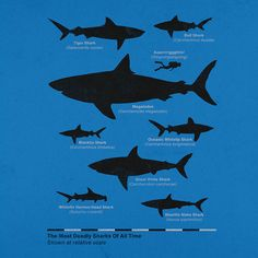 Check out the design The Deadliest Sharks of All Time by Aled Lewis available on Men's T-Shirt on Threadless Sick Boy, Megalodon, African Cichlids, Great White Shark, Shark Week, Surf Art, Boat Plans, Marine Life, Gone Fishing